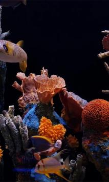 Aquarium Live wallpaper poster