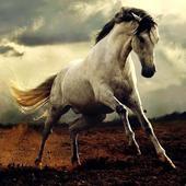 Horse wallpaper icon