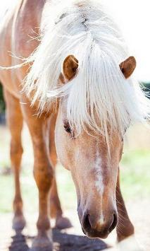 Horse wallpaper screenshot 1