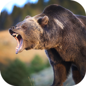 Real Bear Simulator 2017 icon