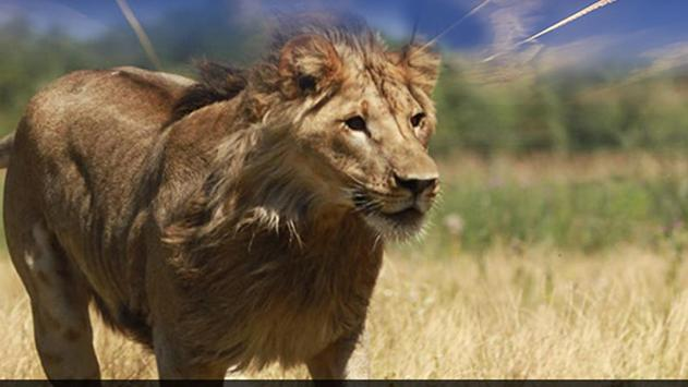 Real Lion Simulator 2017 poster