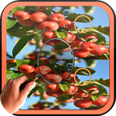 Find Difference garden fruit icon