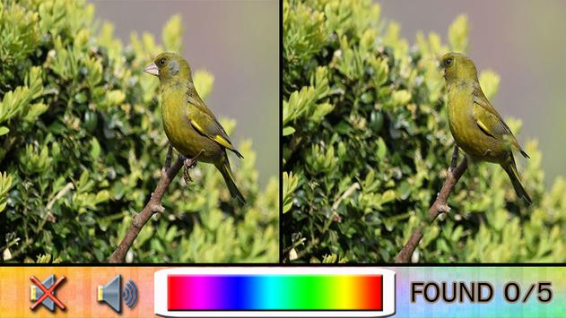 Find Difference bird apk screenshot