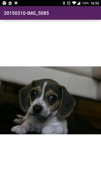 National Puppy Day 2015 screenshot 2