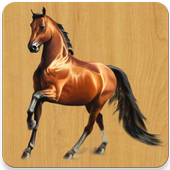Images of fine horses icon