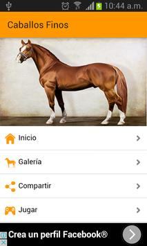Images of fine horses poster