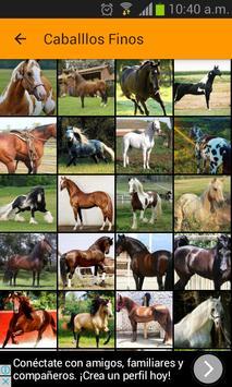Images of fine horses screenshot 1