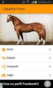Images of fine horses screenshot 6