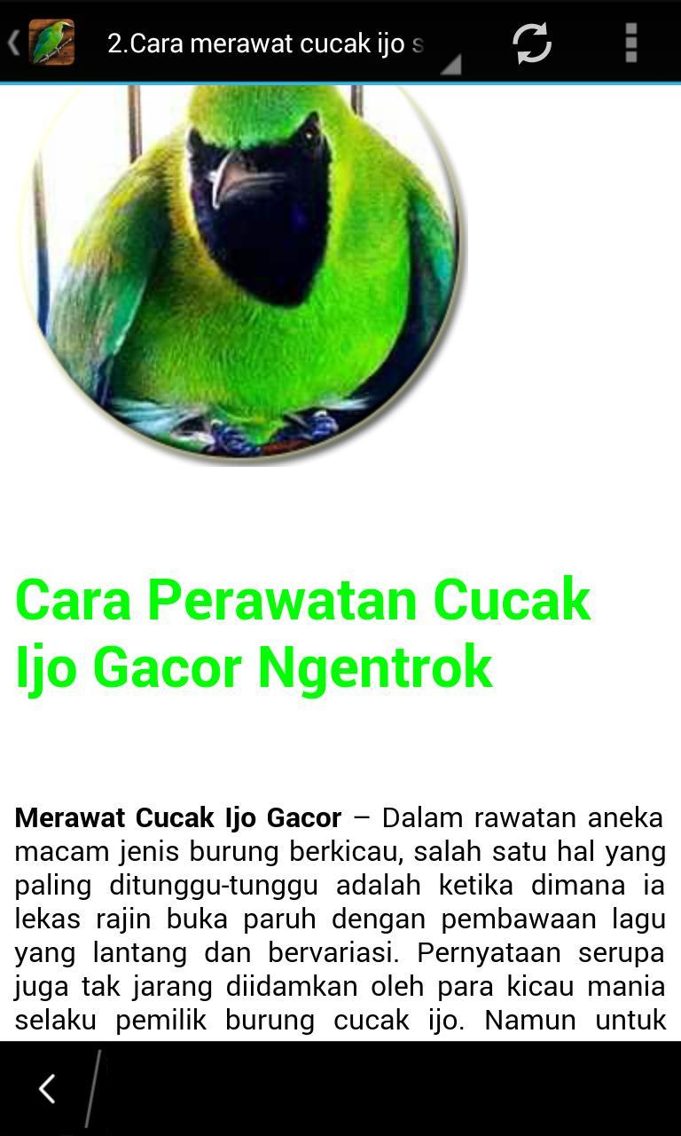 Master Kicau Cucak Ijo For Android Apk Download