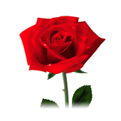 Rosa Ejecutivo icon