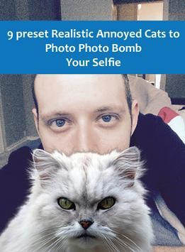 Annoyed Cats screenshot 1