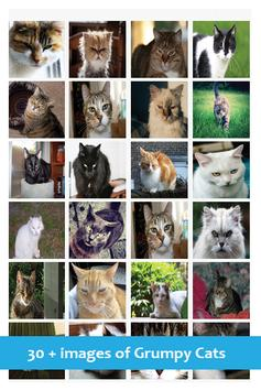 Annoyed Cats screenshot 2