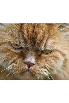 Annoyed Cats screenshot 3