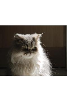 Annoyed Cats screenshot 4