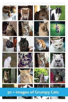 Annoyed Cats screenshot 8