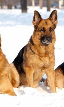 German Shepherd Dogs New Jigsaw Puzzles apk screenshot