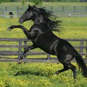 Horses Animals Jigsaw Puzzles icon