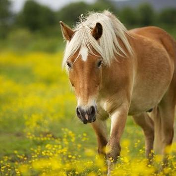 Horses Animals Jigsaw Puzzles apk screenshot