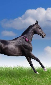 Horses Animals Puzzles Jigsaw screenshot 1