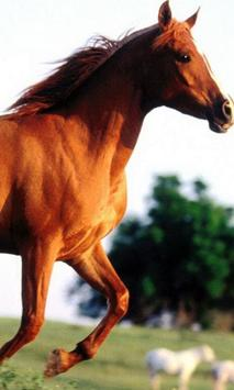 Horses Animals Puzzles Jigsaw screenshot 2