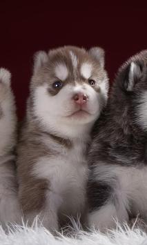 Siberian Husky Dogs New Jigsaw Puzzles screenshot 2