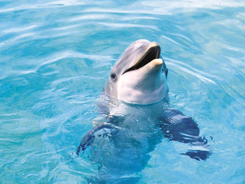 Dolphin Wallpaper Hd For Android Apk Download
