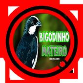Canto de Bigodinho icon