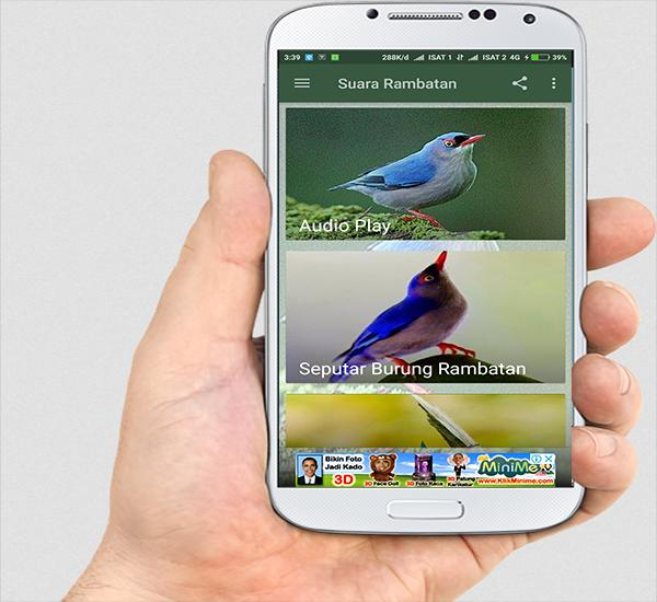 Suara Burung Rambatan Mp3 For Android Apk Download