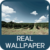 Real Wallpaper icon