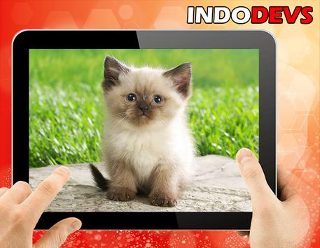 3D Cute Cat Live Wallpaper Apk Screenshot