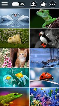 Animals HD Wallpapers 2018 screenshot 2