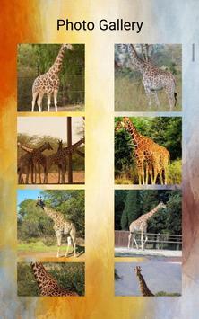 Giraffes Photos and Videos screenshot 10