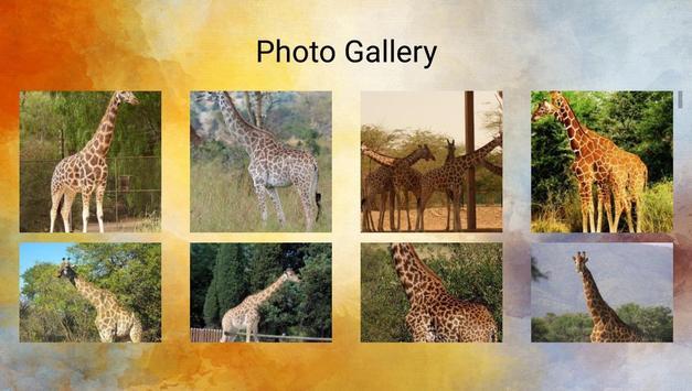 Giraffes Photos and Videos screenshot 13