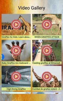 Giraffes Photos and Videos screenshot 1