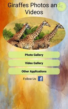 Giraffes Photos and Videos screenshot 8