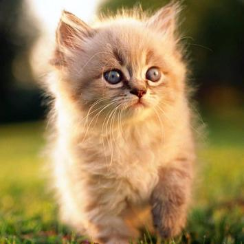 Wallpapers Cute Cats apk screenshot