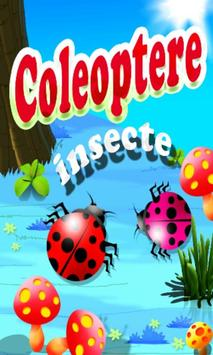 Insecte Coleoptere poster
