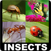 Insect Encyclopedia icon
