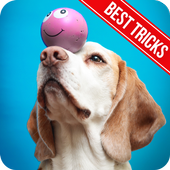 Dog Training - Best Tricks icon