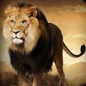 Lion Safari Attack icon