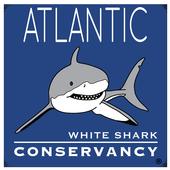 Sharktivity - White Shark App icon
