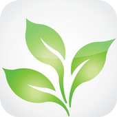 Cassava for android icon