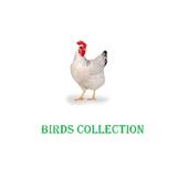 Birds Collection icon