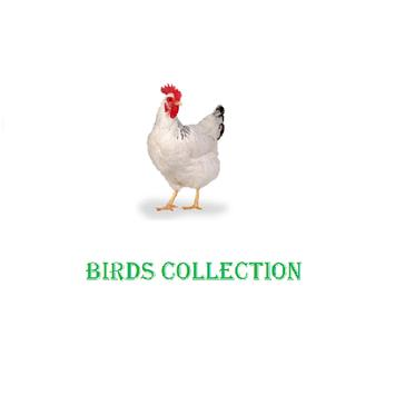 Birds Collection poster