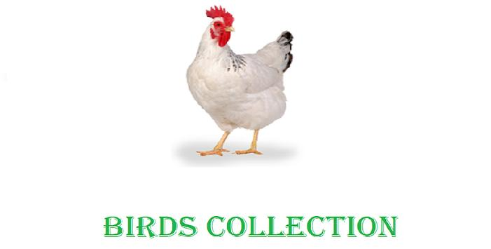 Birds Collection screenshot 1