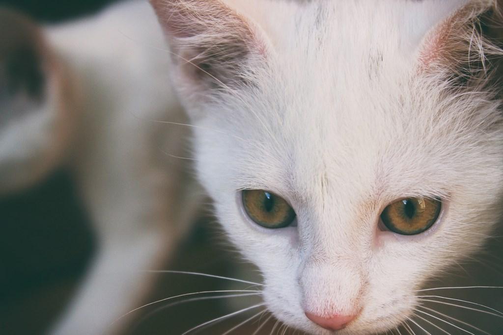 700+ Wallpaper Iphone Kucing HD Terbaru
