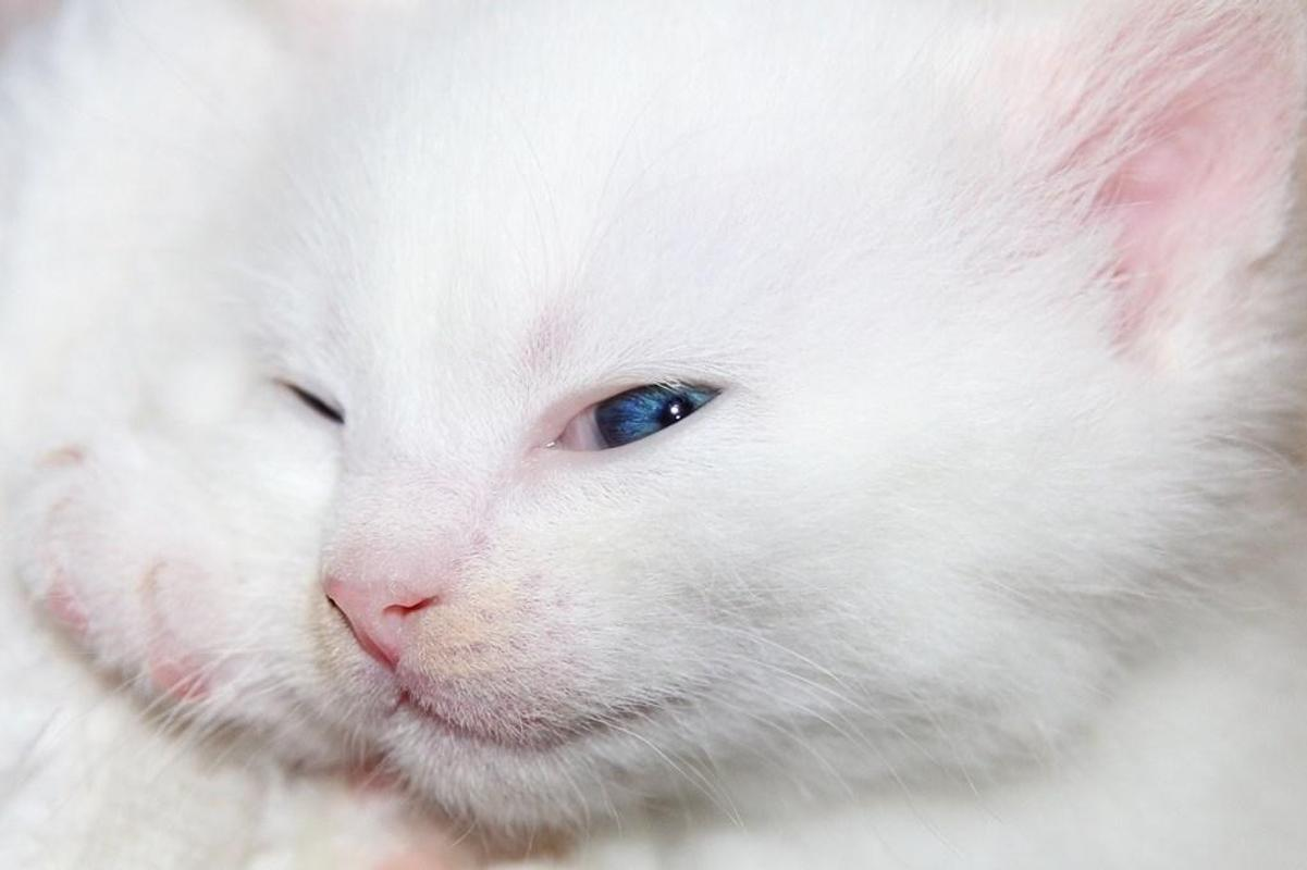White Kitten Wallpapers Screenshot 11