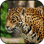 Wild Animals Wallpapers icon