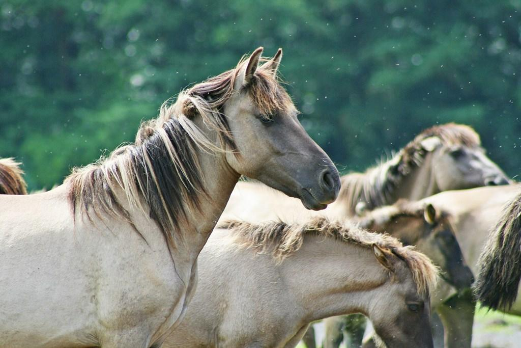 Wild Horse Wallpapers For Android Apk Download Images, Photos, Reviews