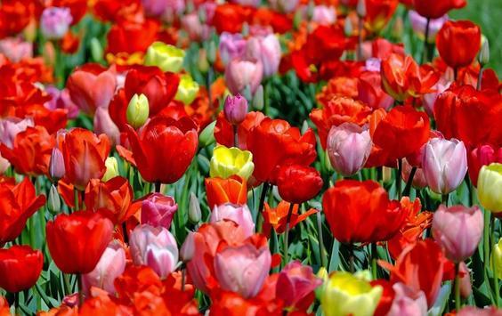 Bloom Wallpapers screenshot 12